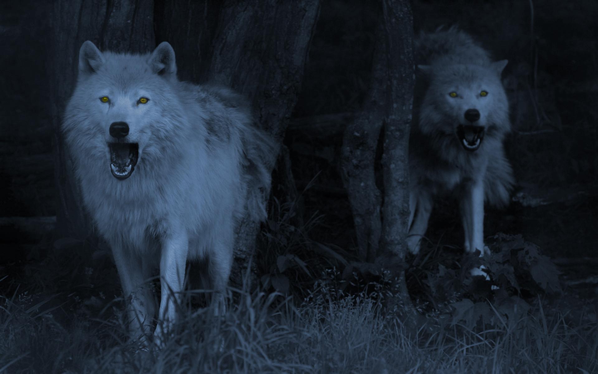 Wolf-Wallpaper.jpg
