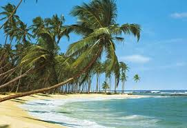 tropicalisland.jpg
