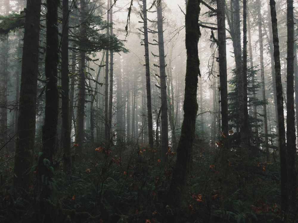 Dark_Foggy_Forest.jpg