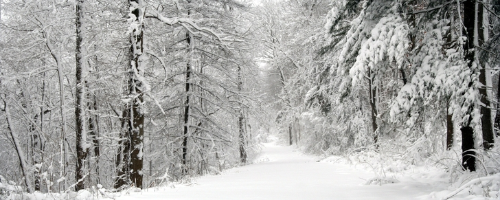snow_forest_path_2560x1024_wallpaper_www.wallpaperfo.com_34.jpg