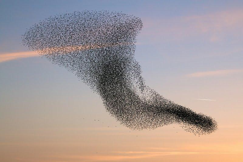 raven_swarm.jpg