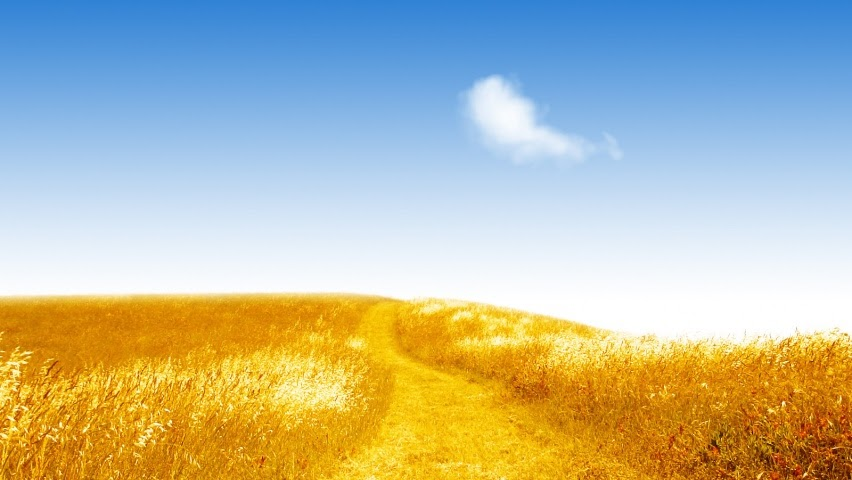 ws_Summer_golden_field_852x480.jpg