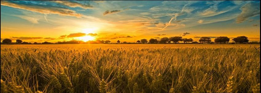 fall_harvest_wheet_field_farm_ranch_sunrise_timeline_cover_banner_for_fb.jpg
