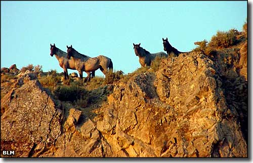 Horses_in_the_Red_Mountains.jpg