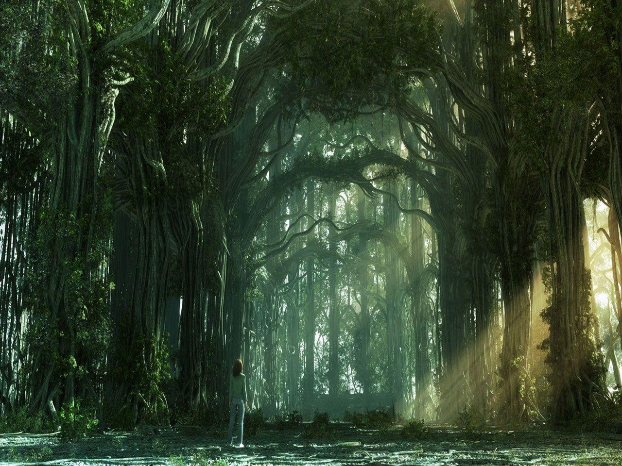 forest-path.jpg