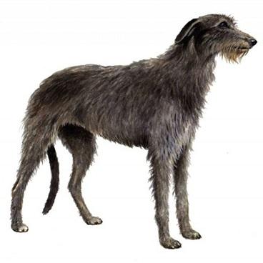 Forest_Wolfhound.jpg