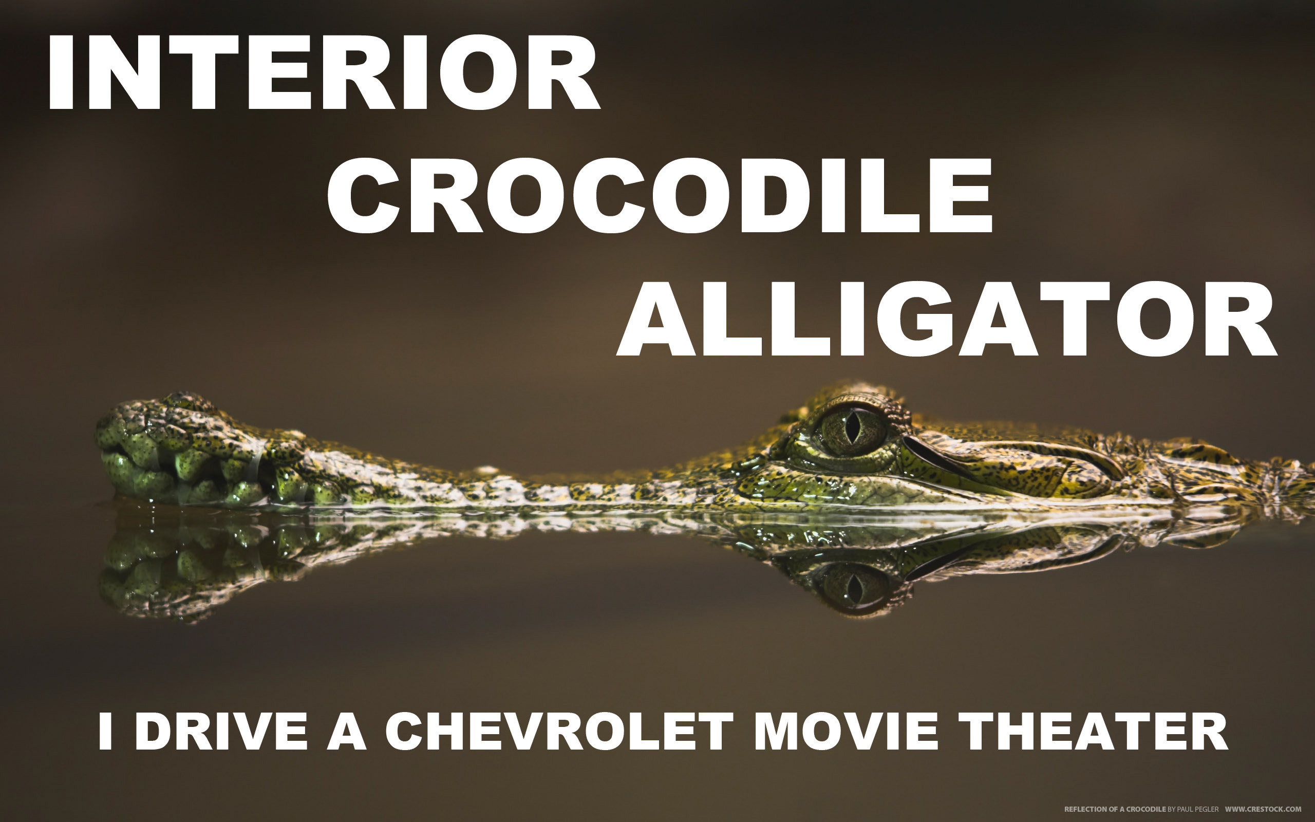 interior_crocodile_alligator.jpg