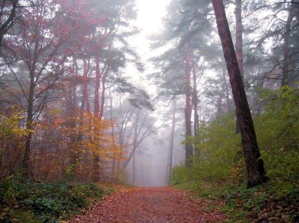 grunewald.jpg