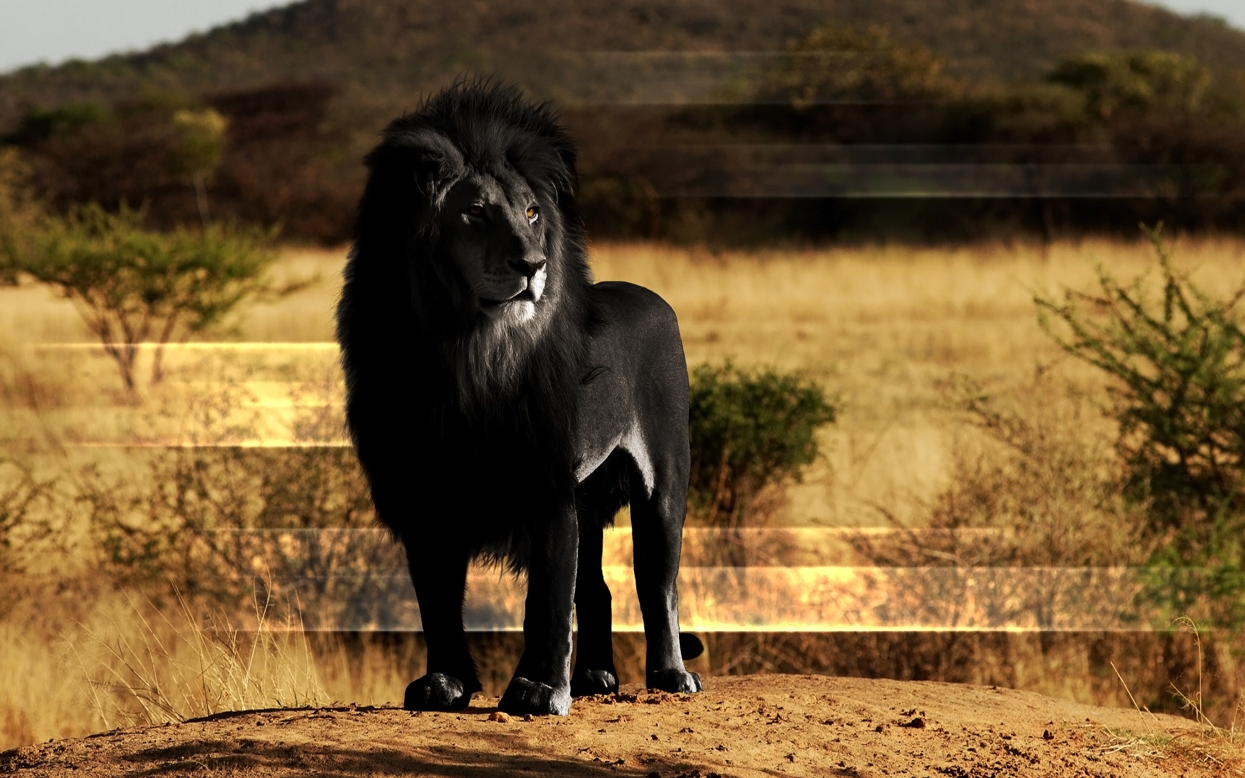 black-lion-mane-rock-wide.jpg