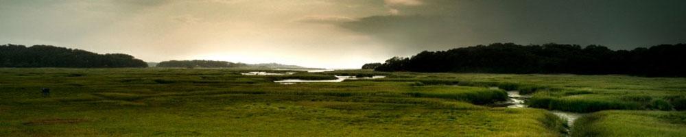 Banner marsh