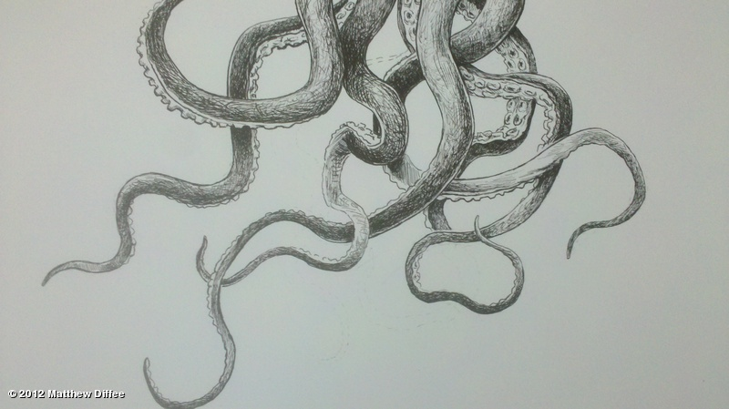 Octopus tentacles drawing tumblr