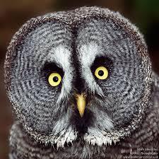owl_3.jpg