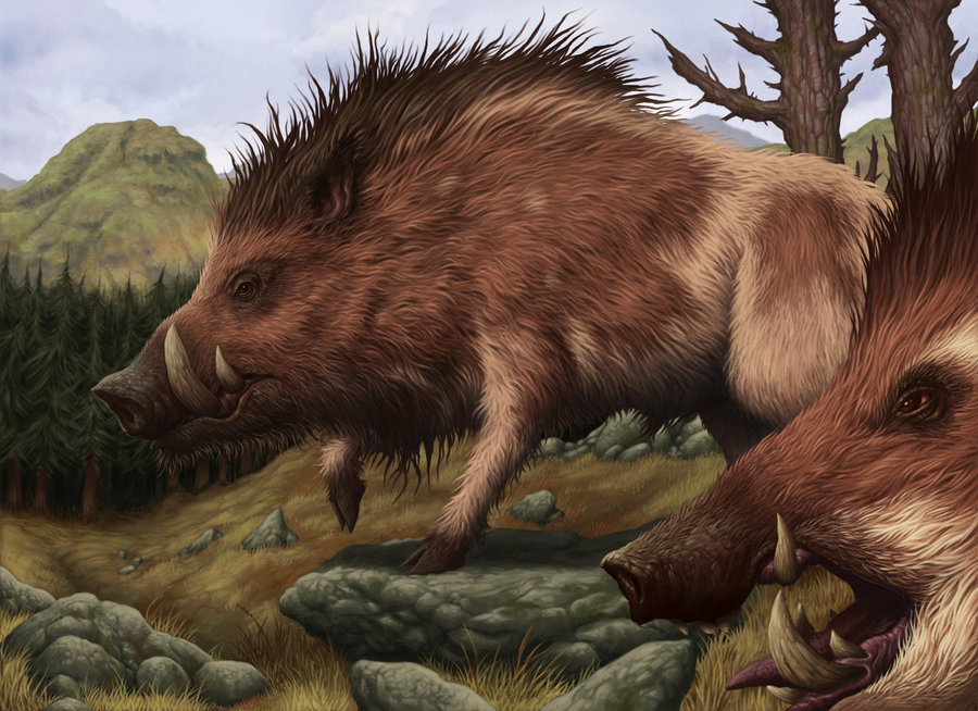 Brindle_Boar_by_DaveAllsop.jpg