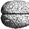 brain drive