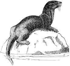 Dire Otter