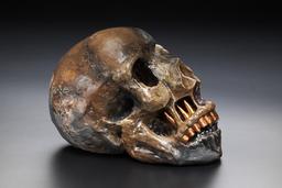 Gold encrusted skull
