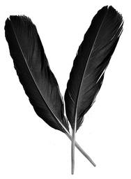 Crow Evans