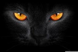 Hex Cat (Elemental Companion)