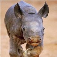 Void Rhino