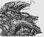Gromnir Groinsplitter