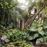 Strange Jungle Garden