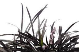 Corpse Grass