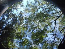 The Sphere of Nishpu