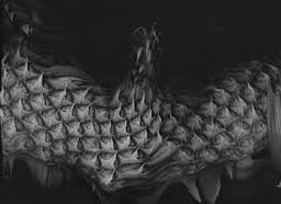 Dragonskin Cloak