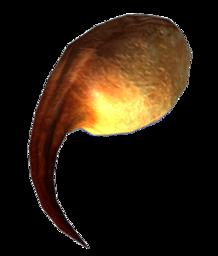 Scutimorph Gland
