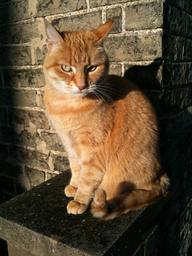 """Rudy """"Lady Ginger"""""""