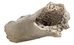 Construct Bone Shard