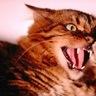 Neko the Cat