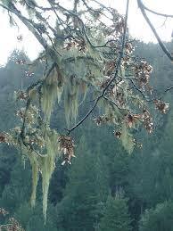 Fluid Moss
