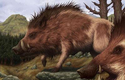 Boar/Pig