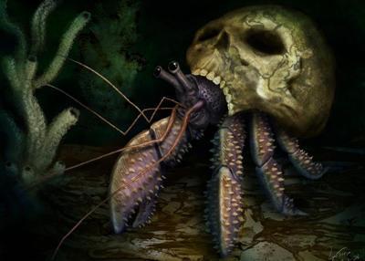 Crab, Bone