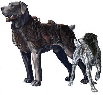 Dog, Riding