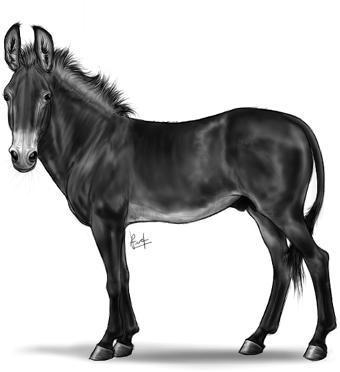 Donkey/Mule