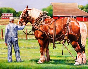 Horse, Draft
