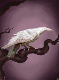 Niveus Corvus