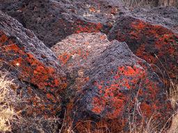 Pyrolichen
