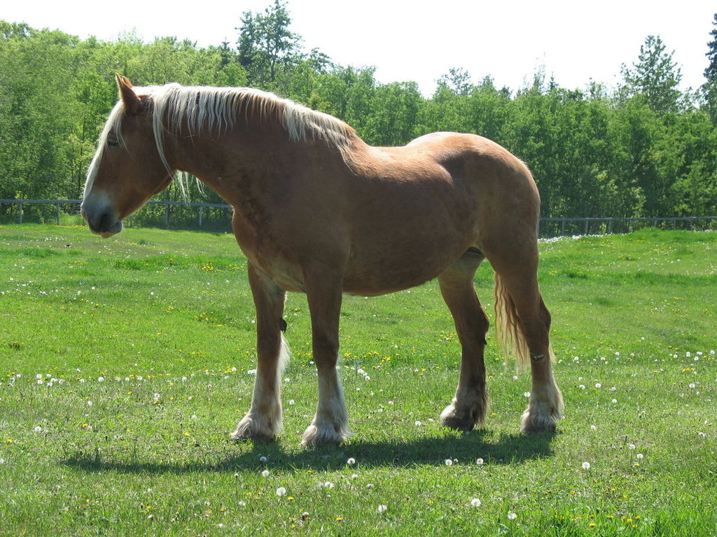Unknown Palomino