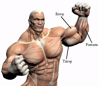 Muscle Augmentation