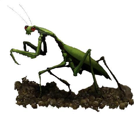 Giant Locust