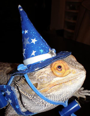 LizardWizard
