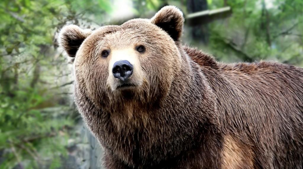 Grumbles the Bear