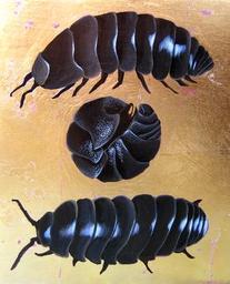Com-Bug