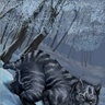 Piotr the Shadowcat