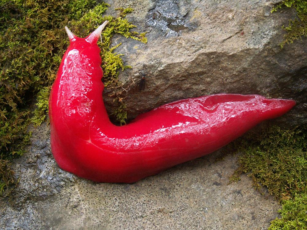 a giant slug