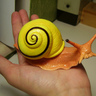 Flail Snail Character
