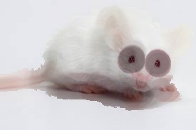 Great White Mouse